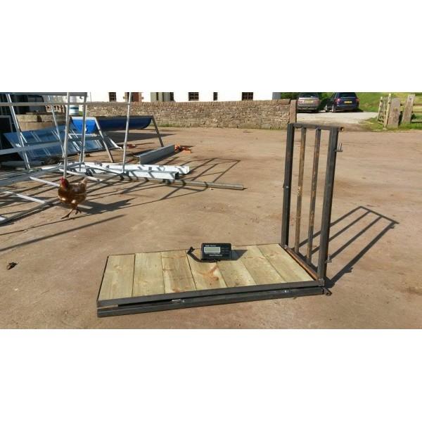 Lamb weigh platform